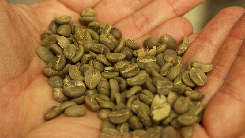 los beneficios del café verde
