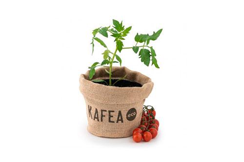 semillas de tomate cherry
